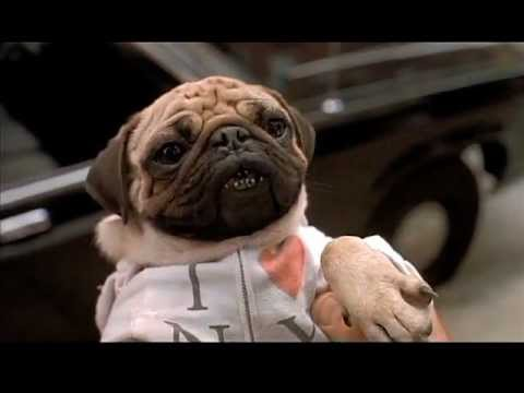 frank the pug from men in black